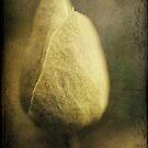 Delicacy by Angelique Brunas