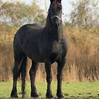 Beautifull baroc horse by theheijt