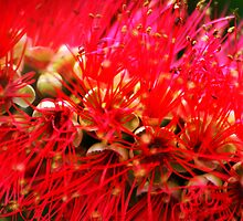 Explosion of Red by Wayne Gerard Trotman