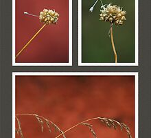Quills by Richard G Witham