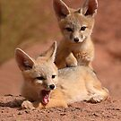Kit Fox Pups Peas In A Pod by Max Allen