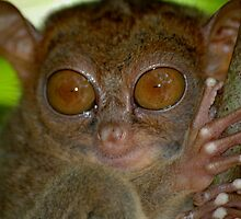 Tarsier from Philippines by Marieseyes