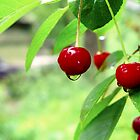 Rainy Cherries by magneta