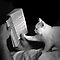 Black & White Images (Cats Only)