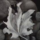 A Fallen Leaf by cooki