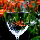 The Wine Garden by 1bluecanoe