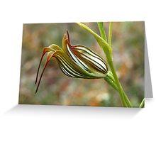 Jug Orchid Greeting Card