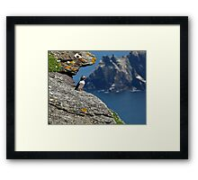 Puffin Skellig Island, Ireland Framed Print