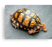 Roadside turtoise Canvas Print