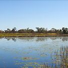 Mareeba Wetlands... by Janine  Hewlett