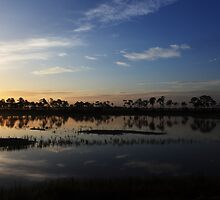 stillness of swamp by kathy s gillentine
