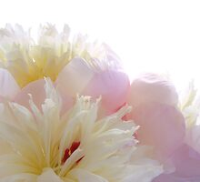 Pretty Peonies by Ann Garrett