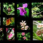 A~natural Botanics Collage  by Isa Rodriguez
