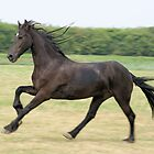 Perfectly captured friesian horse by theheijt