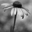 Ophelia by Larry  Stewart