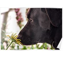 STOP AND SMELL THE DAISY Poster