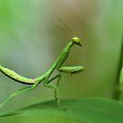 Dear God.....please send me a bug soon!!!! by Dennis Stewart