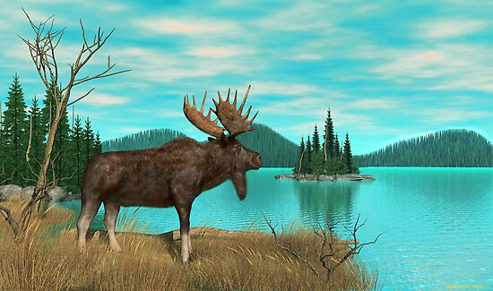 Moose by Walter Colvin