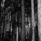 Ghost Forest  by Josh Bradshaw