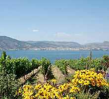 Naramata Vineyard by SherylRSmith