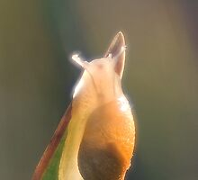 Brilliant little snail by steppeland