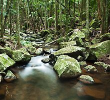 Cedar Creek - Mt Tambourine by GVarney