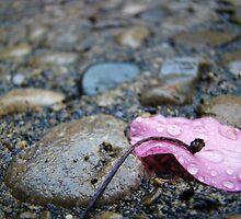 Fallen from Grace by Emma Petitt