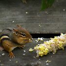 """""""Chippy Shares My Cookout"""" by Melinda Stewart Page"""