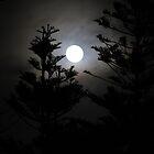 misty moonlight by wendy lamb