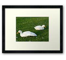 liking the feathers dude Framed Print