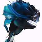 Blue Rose by giohugueth