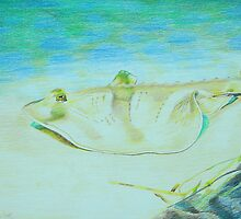 Stingray by brisdon