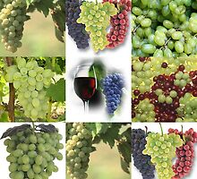 Just Grapes by Linda Miller Gesualdo