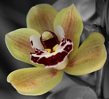 Spot The Orchid by Darryl Leach