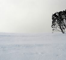 Lonely Tree by Nathan Jermyn