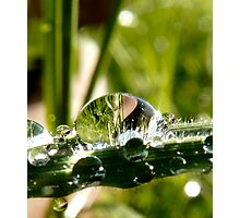 big drop of water on the grass Photographic Print