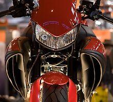 Grrrrr by www.nigellynch photography.com
