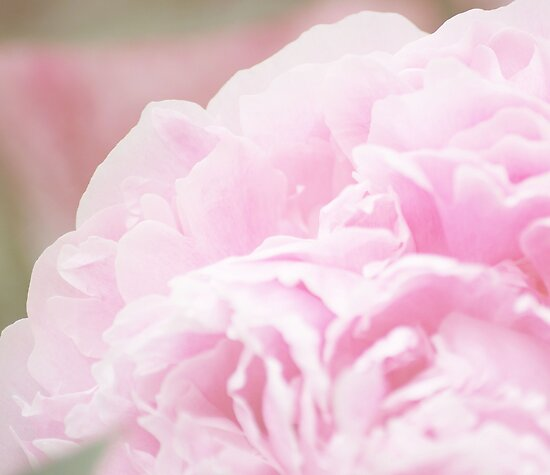 Pink Peony by ©Maria Medeiros