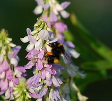 Pollen Feast by Paul Morley
