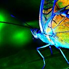 ORange and BLue METALLIC Butterfly by kellimays
