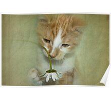 Playful Puss Poster