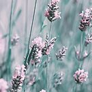 Lovely Lavender by Selina Tour