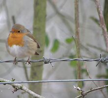 Red Robin by Lorna Boyer