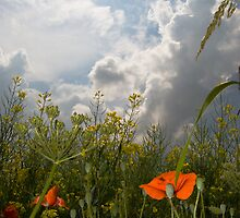Summer Field by Nigel Bangert
