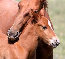 A mothers love by Kimberly Palmer