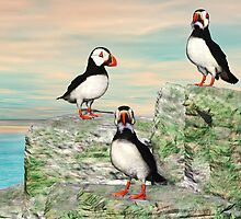 Atlantic Puffin by Walter Colvin