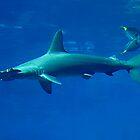 Shark by dieselpete