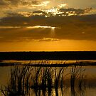 Everglades Evening by David Lee Thompson