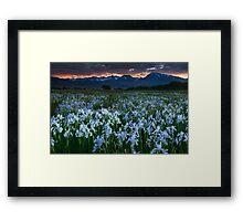 Wild Iris and Sierra Sunset Framed Print