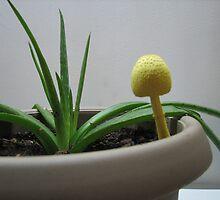 Yellow Mushroom and Aloe Vera by DeaconBlues